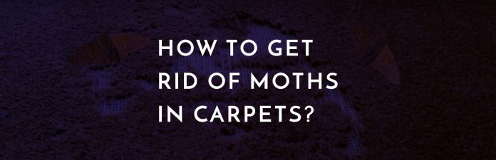 How to get rid of moths in carpets