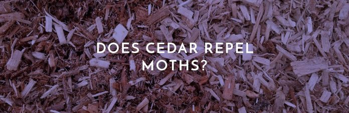 does cedar repel moths