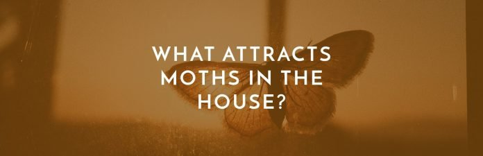 What Attracts Moths In The House