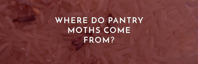 where do pantry moths come from