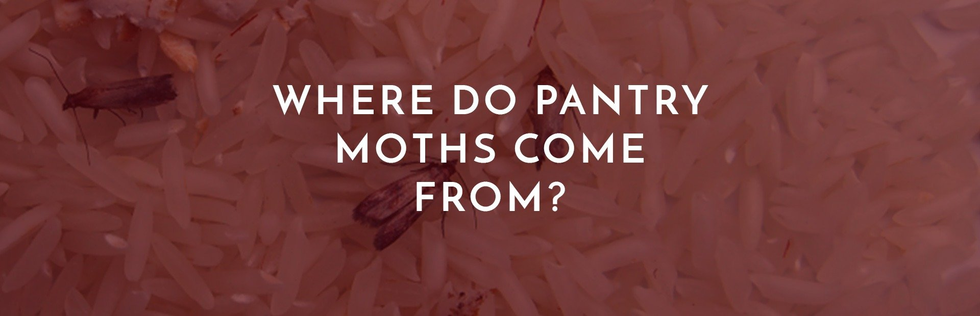 Where Do Pantry Moths Come From?