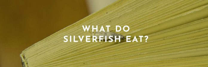 what do silverfish eat