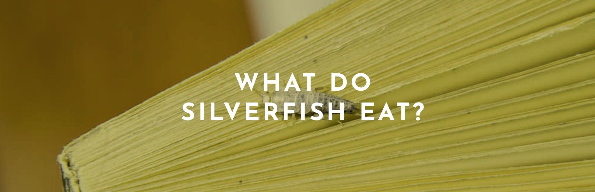 What Do Silverfish Eat? Information on Their Diet and What Attracts Them in Your Home.