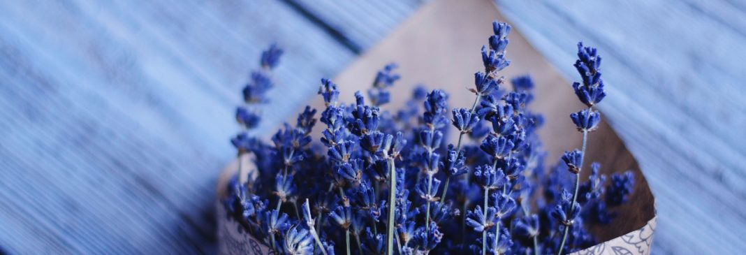Why Can Lavender Repel Moths?